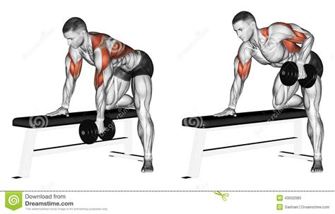 Bench Press Row Exercising End Dumbbell With One Hand Stock Illustration