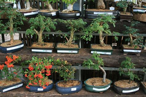 New Bonsai Gardens by Starke Ayres Garden Centre Starke Ayres Page 16