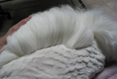 awn wool awn wool german angora bunnies images