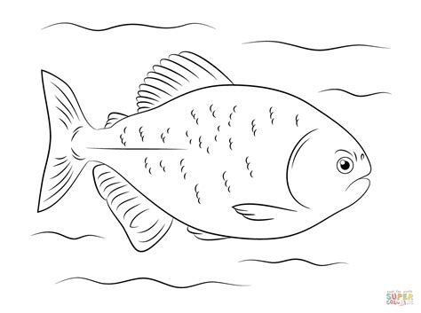 red bellied piranha coloring page free printable