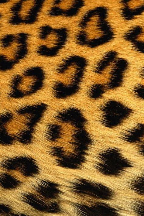 wallpaper iphone 5 leopard beautiful leopard print iphone 4 wallpaper wallpaper hd