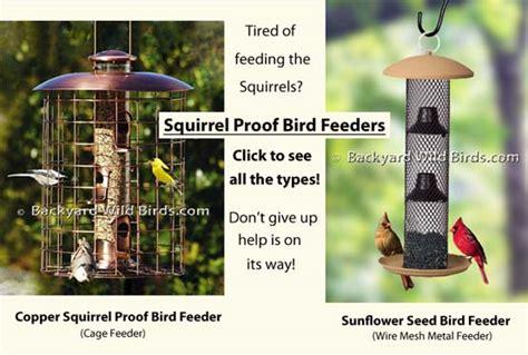 backyard bird feeder backyard bird feeder outdoor goods
