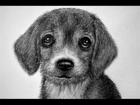 imagenes de un animal dibujos a lapiz de perros www pixshark com images