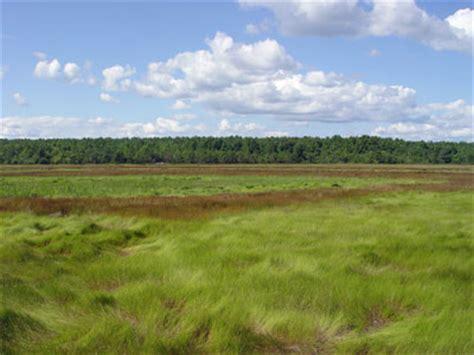 maine natural areas program natural community fact sheet for salt hay saltmarsh