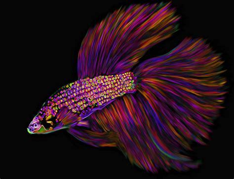betta colors fish contest neon betta by carol colors on deviantart