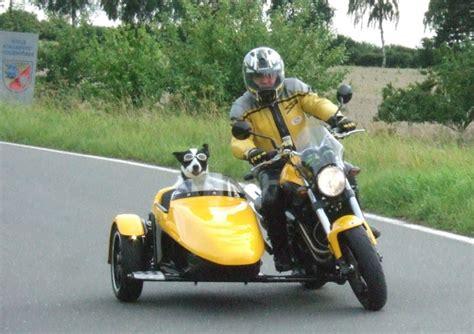 Motorrad Gespann F R Hunde by Schwenkerseitenwagen Hunde