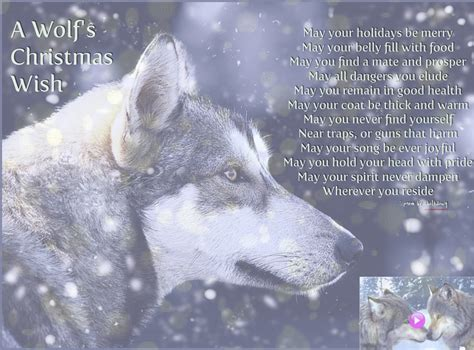 wolf christmas wallpaper wallpapersafari