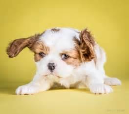 shake puppies carli davidson