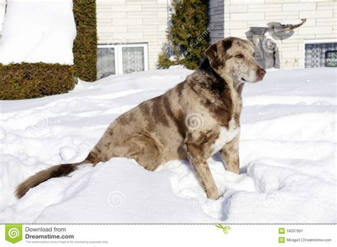 in house dog sitting dog sitting in front of house stock image image 18337991
