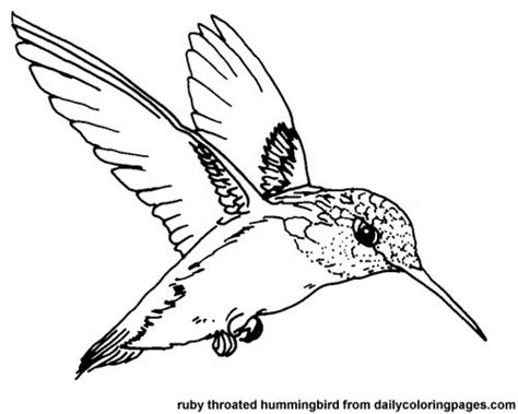 coloring pages with hummingbirds get this printable hummingbird coloring pages 00467