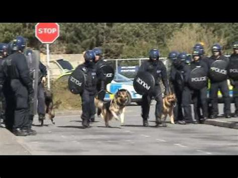 dog section police kent police dog section youtube