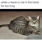 Cat In The Hood – JokeitUPcom