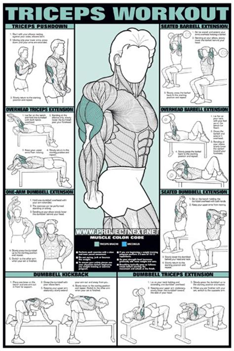 Triceps workout for men barbell dumbbell seated exercise gym yeah