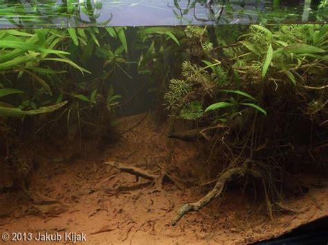aquascape online malaysia 17 best ideas about aquascaping on pinterest aquarium