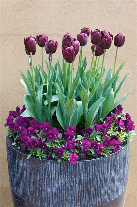 Tulpen Einpflanzen by Fr 252 Hlingsblumen Pflanzen Tolle Kombinationen