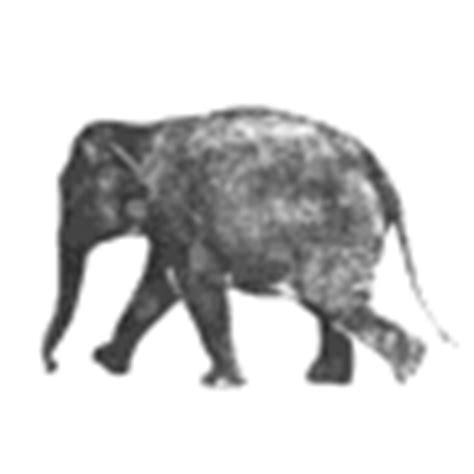 tutorial gambar gif rahmian4 gambar animasi gif hewan dari jenis gajah