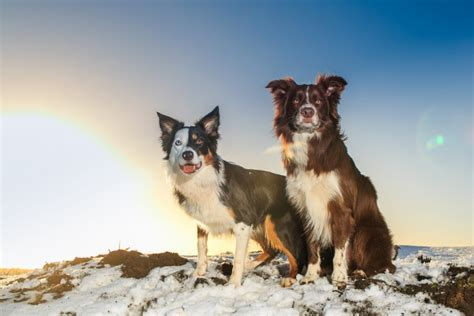 best hiking breeds 15 best breeds for hiking buddies page 15 of 16 outwardon
