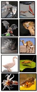 Jerapah Khusus Hitam kumpulan soal ciri khusus makhluk hidup media belajar