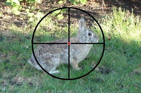 how to a to rabbit hunt rabbit shooting tips you to learn the best and most complete tips
