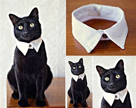 Tshirt Collar Cat how to diy easy and cat collar from shirt