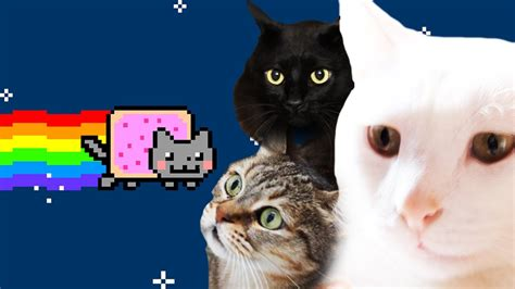 Cat Cover nyan cat real cats cover by kartiv2