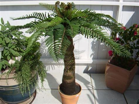 warum ist die deko palme so attraktiv archzine net