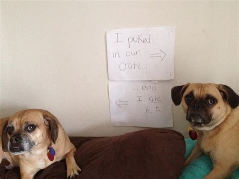 shamed dogs 20 bad dogs being shamed with signs pleated