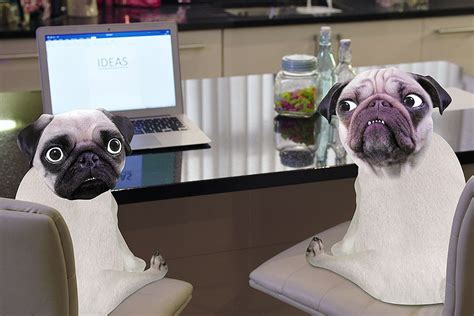 where did pugs come from youtuber dantdm includes pet pug dogs in show dantdm creates a big