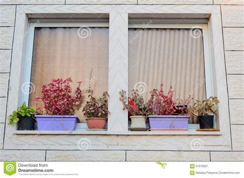 vasi per davanzali una finestra con le tende ed i vasi da fiori sul davanzale