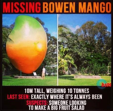 Mango Meme - memes of the missing mango mackay daily mercury