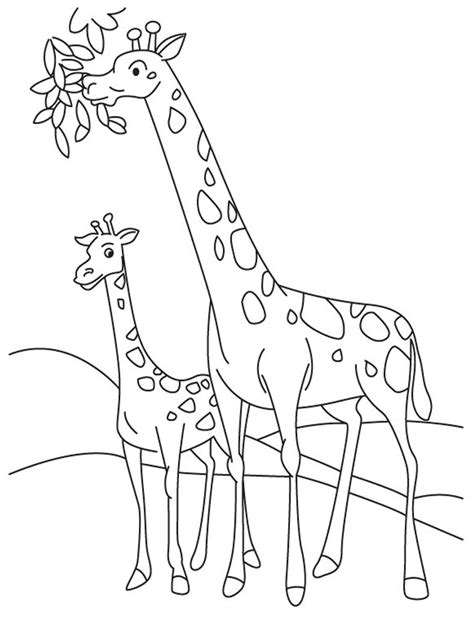 giraffe eating coloring pages giraffe coloring pages realistic realistic coloring pages