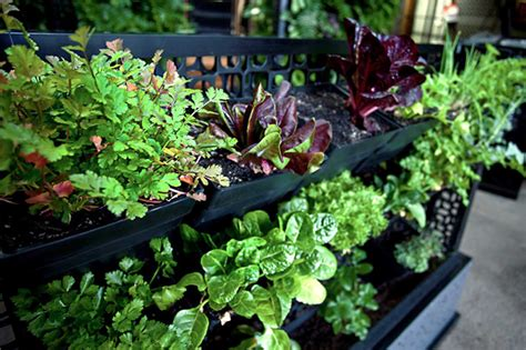 Good How To Make A Vege Garden #9: Post-veggies-and-herbs.jpg