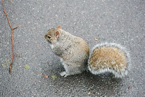 Does Car Insurance Cover Squirrel Damage?   RateLab.ca