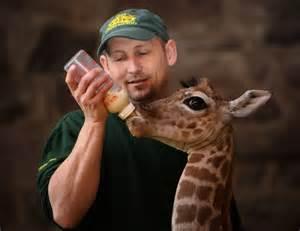 Zookeeper Degree by Zoo Keeper Best Koloni Hitam