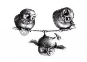 Barn Owl Meaning Produktiv Prokrastinieren Mit Frau Mi Eulen Rocken