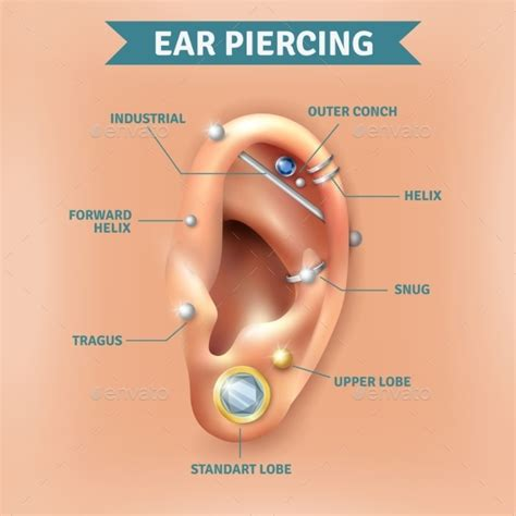 ear types ear piercing diagram www pixshark images galleries with a bite
