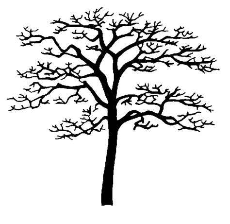 hickory tree coloring page eastern flowering dogwood trees insects and diseases of