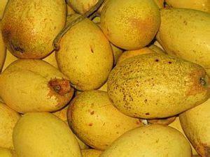 Qnc Jelly Gamat Daerah Bogor khasiat dan manfaat buah kemang untuk kesehatan usus