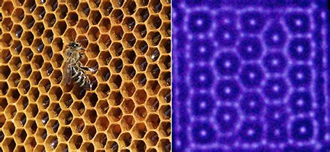 patterns in nature honeycomb this device turns neon plasma into natural patterns pbs