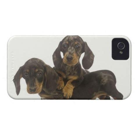 dachshund puppies price karri best price dachshund puppies mate iphone 4 dachshund puppies