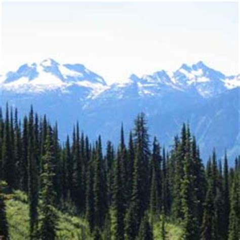 Forest Mba Us News by Bc Forestry Revitalization Trust