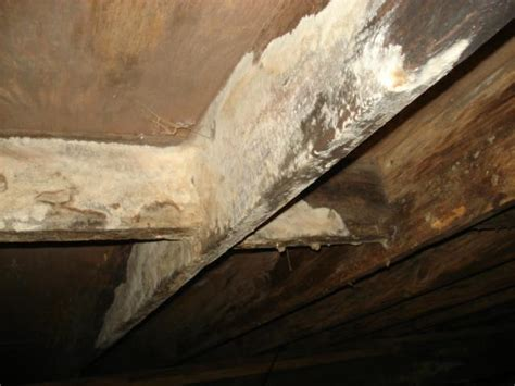white mold in house yellow and white mold under house pictures to pin on pinterest pinsdaddy