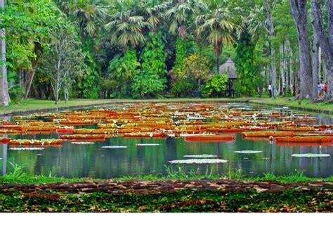 Botanical Garden Mauritius Mauritius Botanical Garden Mauritius Island Pinterest