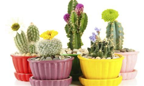 decorar jardin con plantas deserticas plantas peque 241 as para decorar decogarden
