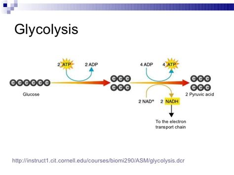 diagram of glycolysis diagram of glycolysis 28 images simple glycolysis