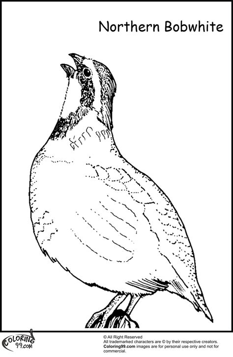 coloring pages for quail quail coloring pages team colors