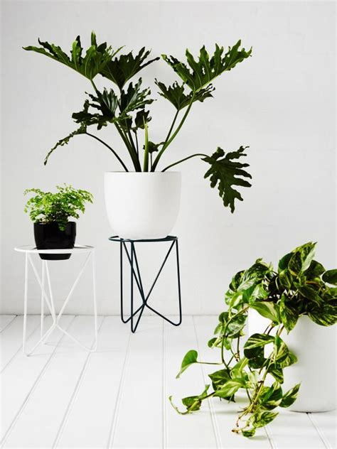 Standing Plant Medium plant stand indoor woodworking projects plans