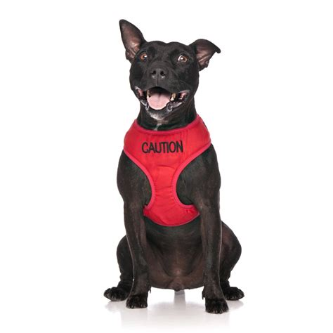 harness vest caution vest harness friendly collars
