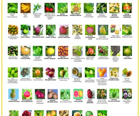 list of colors a z list of fruits and vegetables by color in glomorous