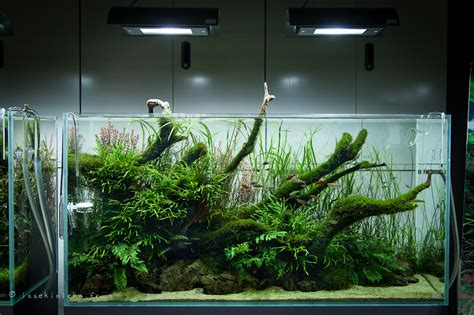 aquascaping ada billedresultat for ada cube garden jungle aquascape